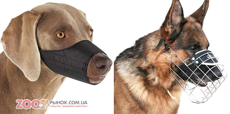 Как сделать собачий намордник